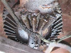 Image FMC C-150 Piston Filler 1513927